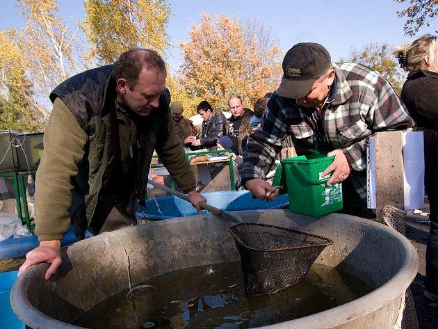 Účastníci výlovu rybníku Nezmar si prohlížejí v akváriu vylovené ryby. Výlov tohoto u nás největšího rybníku se konal v průběhu uplynulého víkendu.