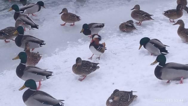 Čtenáři Deníku zaslali fotografie ze zimní krajiny