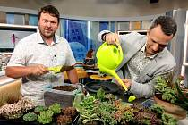 Jan Weiss často vystupuje i v televizních pořadech, kde předvádí svůj zahradnický um.
