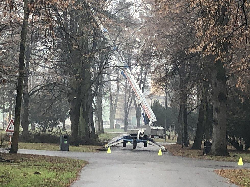 Likvidace jmelí v Městských sadech.