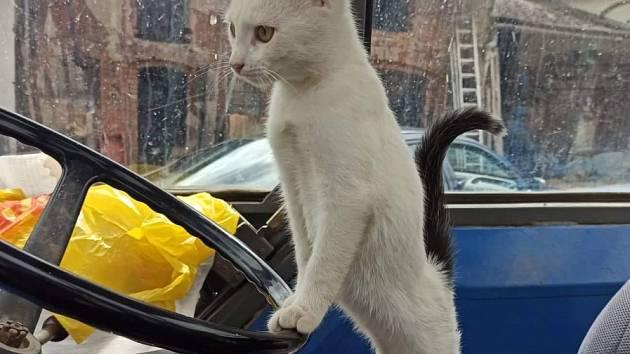 Kočka se vydala na výlet traktorem.