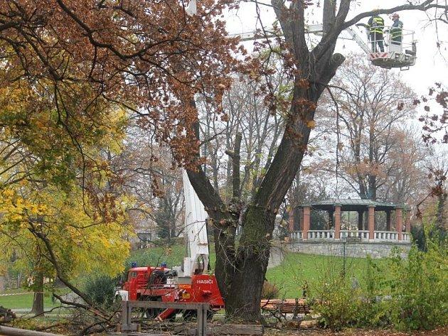 Během středy byl dub velkoplodý pokácen do výšky čtyř až pěti metrů.