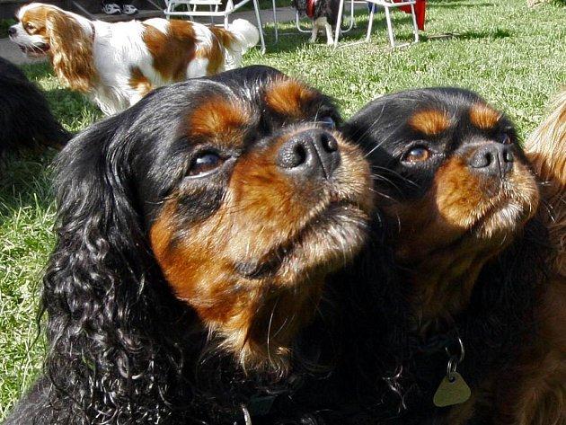 Čipovat psy nechávají především členové chovatelských klubů nebo lidé, kteří se chystají se svým miláčkem do zahraničí.
