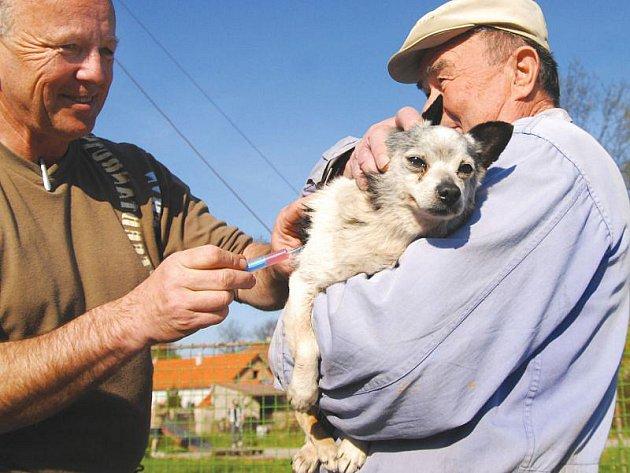 Očkování psů. Ilustrační foto.