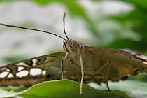V Arboretu se v červenci počítá s velmi zajímavou výstavou motýlů.