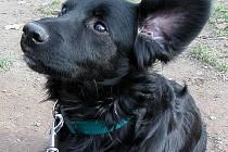 Pes trpící kašlem má předepsané tlumicí kapky, v horších případech antibiotika.