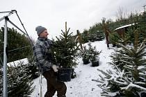 Je nejvyšší čas. Vánoce jsou za pár dní, a tak Opavané berou útokem nejen markety, kde nakupují poslední dárky, ale také prostory před nimi, kde prodejci lákají na vánoční stromky.