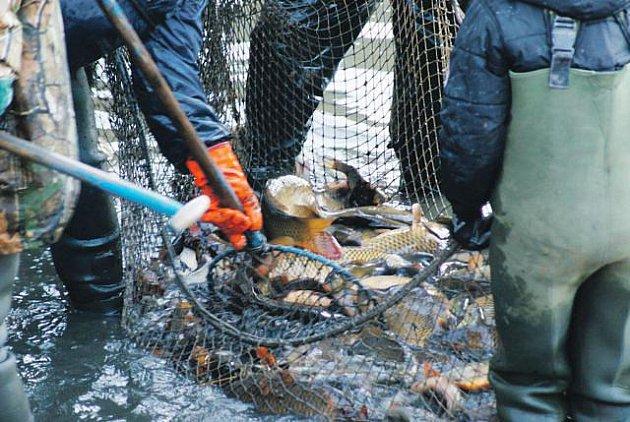 Rybník v Kajlovci vydal rybářům své plody.