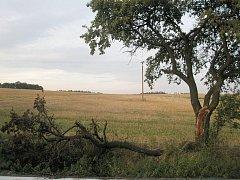 Kusy polámaných větví leží u cesty mezi Moravicí a Melčí. Takovouto spoušť mají na svědomí sběrači švestek.