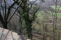 Momentálně se kácí stromy na svahu pod Červeným zámkem ve směru na Mariánské louky.