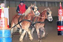 Pavel Živníček s koňmi Zoran a Zafír z JK Hradec nad Moravicí