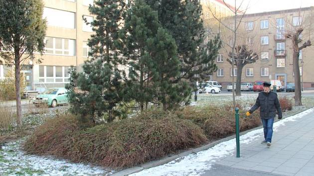 Za sto tisíc město obnoví zeleň u parkoviště ve vnitrobloku ulice Masařská.