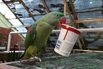 Z minizoo uletěl papoušek, zahlédli jste ho?