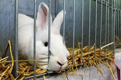 Mladík králíky kradl na různých místech Opavy.