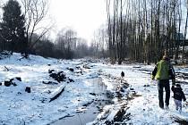 Z olší podél Kamenického potoka ve Vítkově zůstaly jen pařezy.