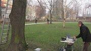 Tahové zkoušky, které simulují zatížení při vichřici, umožňují vypočítat jak je strom odolný proti vyvrácení.