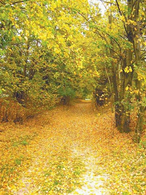 Vítězný snímek s názvem Ulice Lipová na podzim.