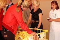 Vendula Svobodová (vlevo)  si odpoledne v doprovodu primářky Dagmar Prejdové (uprostřed) prohlédla novorozenecké oddělení.