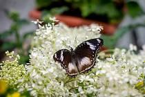 Kouzlu živých motýlů v Arboretu Nový Dvůr, 12. června 2019.
