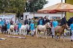 Velké Hoštice již tradičně ožily křtem hříbat a výstavou plemene Český sportovní pony.
