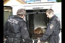 Odchyt různých mnohdy i překvapivých druhů zvířat patří k činnosti strážníků v celém Česku. Na ilutsračním snímku městští strážníci z Plzně.