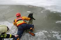 Jeden z kurióznějších zákroků si hasiči připsali ve čtvrtek 28. března ráno v Markvartovicích. Bylo něco po osmé hodině, když se dozvěděli, že v rybníku u místního fotbalového hřiště bojuje o přežití neznámý velký černý pes.