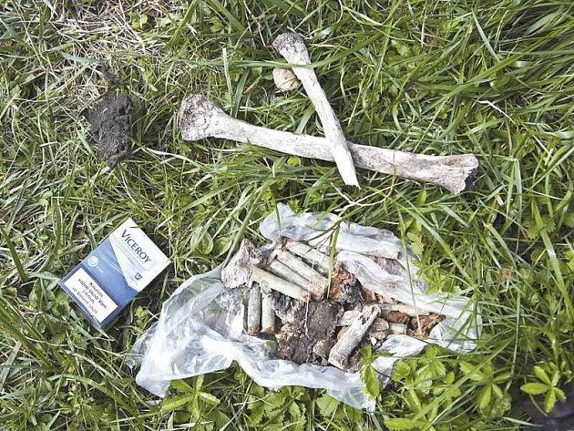 Tuto hromádku kostí jsme ještě počátkem tohoto týdne našli na staveništi u školy v Darkovičkách. Krabičku cigaret jsme tam položili pro porovnání velikosti nálezu.