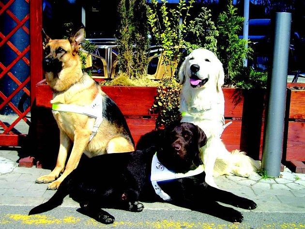 Pes nebo fena? Pro práci vodicího psa pohlaví není rozhodující.