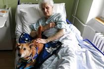 Netradiční psí návštěvy si pacienti vítkovské léčebny dlouhodobě nemocných ihned oblíbili.
