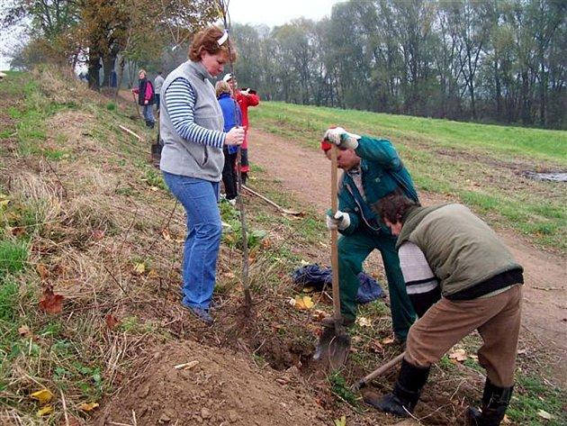 Výsadba stromů na Petřatínské cestě.