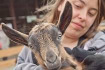 I tuto kozu obdivovali loni návštěvníci Dne mláďat, který se koná na školním statku.