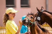 Také letos se milovníci koní sešli ve Velkých Hošticích. Hlavními taháky byly křtění hříbat a Memoriál Lojzy Fialy ve vozatajských soutěžích.