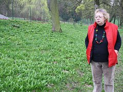 Kastelánka raduňského zámku Eva Kolářová stojí u záplavy medvědího česneku v zámecké zahradě.