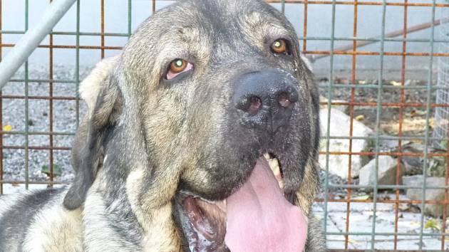 Ve spolupráci se skauty pak opavská radnice řeší i možnosti jiných nezbytných služeb pro potřebné, třeba venčení psů. Ilustrační foto.