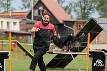 Šeltie Devča cvičí pod vedením své paničky Magdy houpačku.
