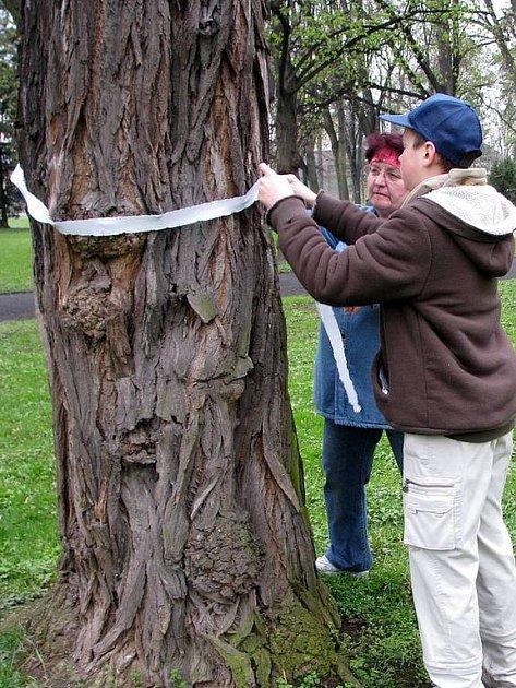 Členové Občanského sdružení Za Opavu navazují na stromy určené k likvidaci bílé pásky.