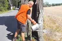 Dobrovolníci ošetřovali stromy historické lipové aleje.
