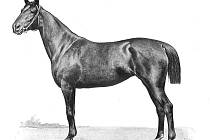 Plemeno trakénského koně patří k nejlepším na světě. U nás se jeho chov po roce 1990 vytratil a čeští chovatelé usilují o jeho obnovu.