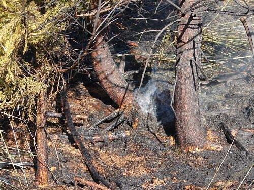 Škodu za sto tisíc korun mají Lesy ČR a.s., kterým v pátek odpoledne hořel pod Pustou Polomí les o rozloze zhruba pěti hektarů. Šlo o mladý smíšený les, školku a trávu.