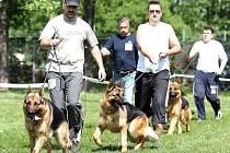 Psí elita. Němečtí ovčáci soutěžili na cvičišti v Městských sadech.