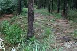 Suť v lese na Lipině.