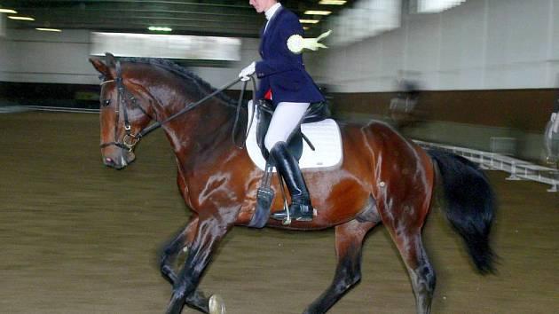 Nejúspěšnější jezdkyní v halových drezurních závodech v Albertovci byla domácí Daniela Křemenová. Na snímku na koni Amadeus 5.