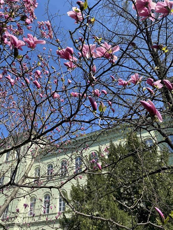 Jarní rozkvetlá Opava.