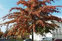 Podzim vybral ze své palety ty nejkrásnější odstíny hnědé.