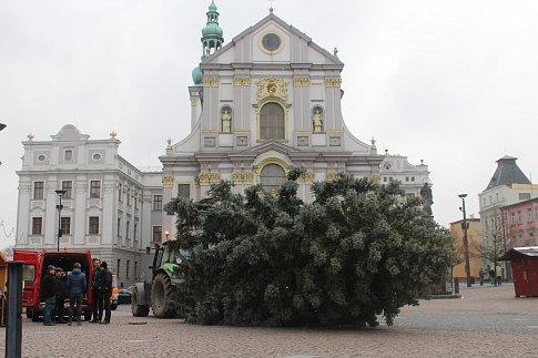 Stavění vánočního stromu na Dolním náměstí v Opavě.