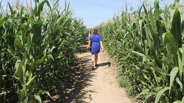 Cesty v opavském kukuřičném labyrintu jsou dlouhé přibližně tři a půl kilometru.