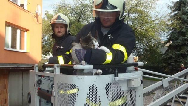 Kocoura, visícího v pootevřeném okně za hlavu, museli zachraňovat v úterý vpodvečer profesionální hasiči.