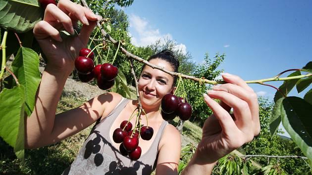 Ochutnají jablka i mandle. V jedlé aleji