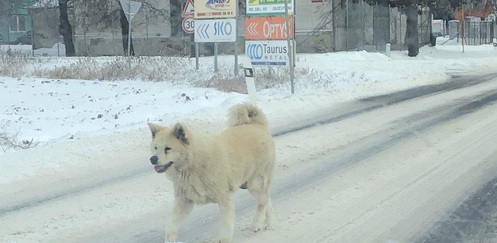 Zima na Opavsku a Vítkovsku. Pes na hlavním tahu Opava - Olomouc