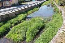 Více trávy než vody. Koryto řeky v Budišově nad Budišovkou zarůstá a brání vodě téct.